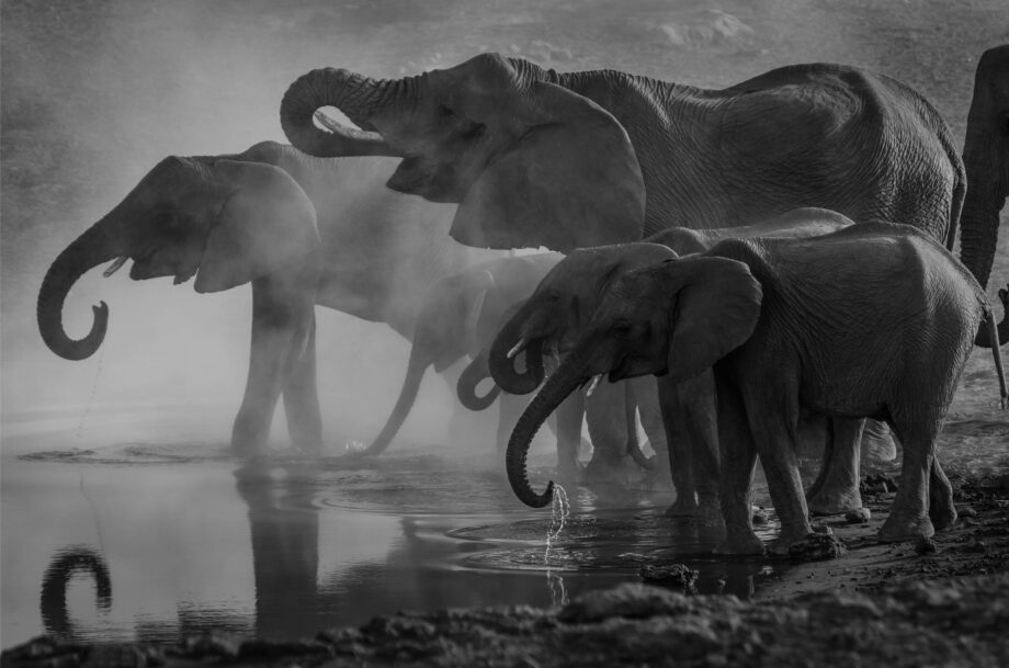 8946004323221_Richard Jacobs_Elephant herd@0.5x-50