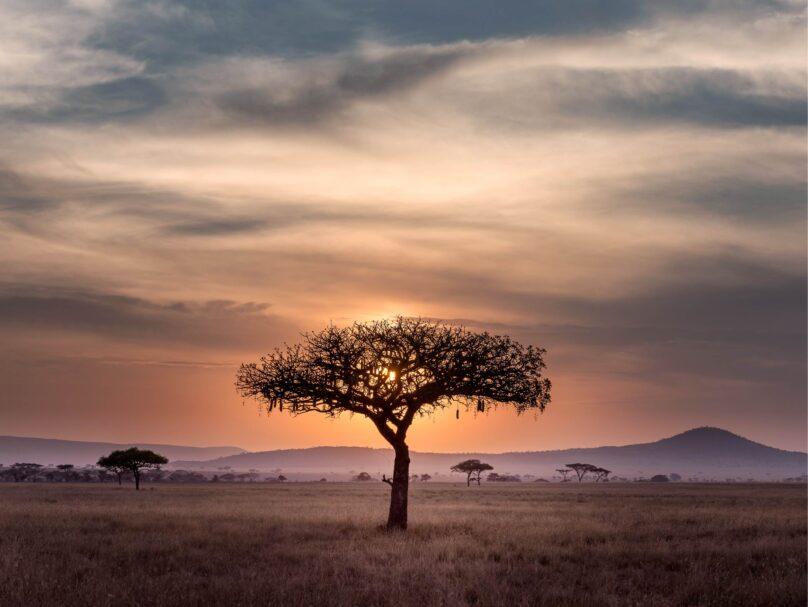 8946004323290_Hu Chen_Beautiful Africa@0.5x-50