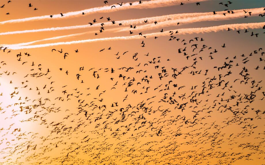8946004323368_Barth Bailey_Bird migration@0.5x-50