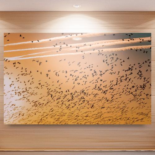 8946004323368_Barth Bailey_Bird migration_Mockup
