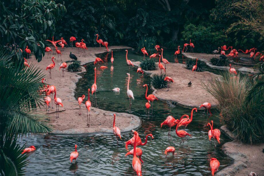 8946004323382_Matthew Cabret_Flamingo Paradise@0.5x-50