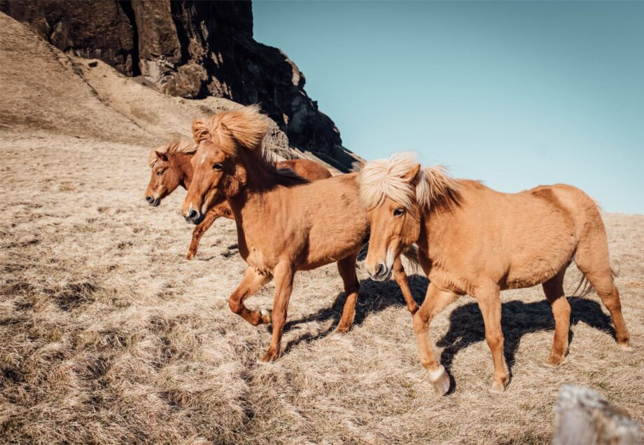 8946004323436_Alice Donovan_Wild horses@0.5x-50
