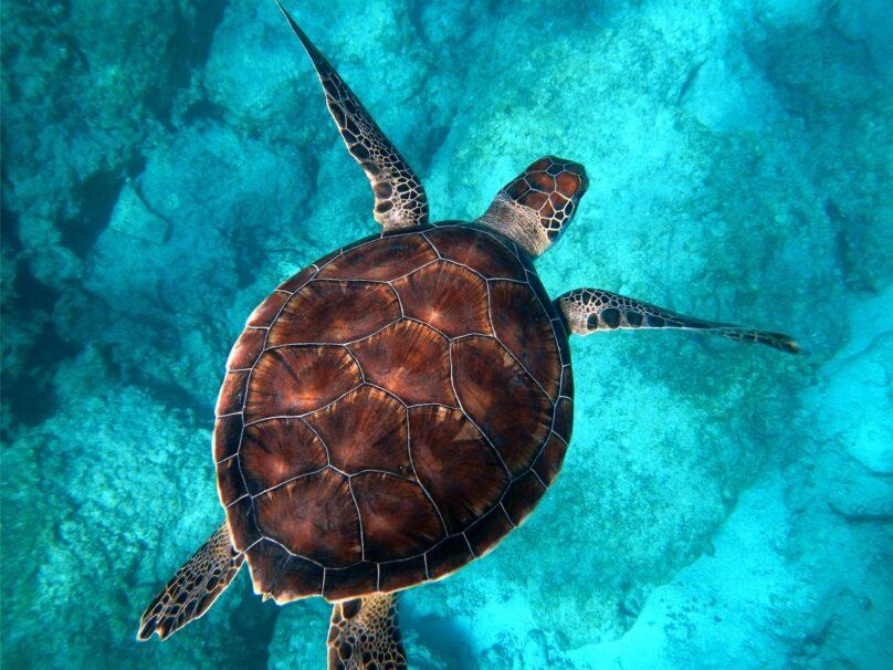 8946004323627_Randall Ruiz_Sea turtle@0.5x-50