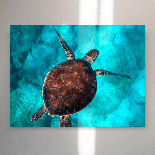 8946004323627_Randall Ruiz_Sea turtle_mockup