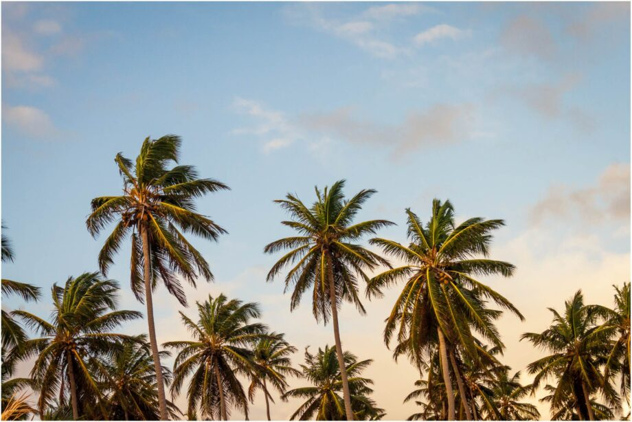8946004323726_Thomas Lefebvre_Palm tree vibe@0.5x-50