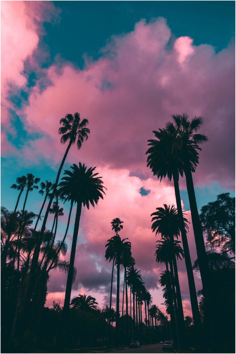 8946004323733_Robero Nickson_Pink palm trees@0.5x-50