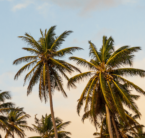 Palm-tree-vibe-min