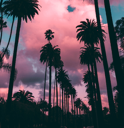 Pink-palm-trees-min