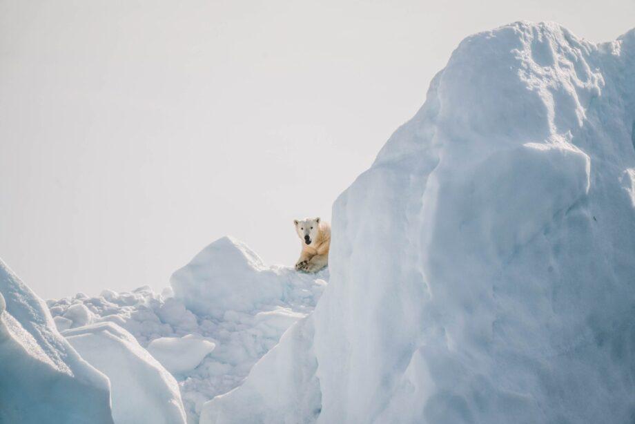 8946004323818_AnnieaSpratt_Polar bear@0.5x-50