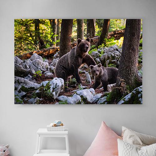 8946004323825_Marco Secchi_Bears-Mockup