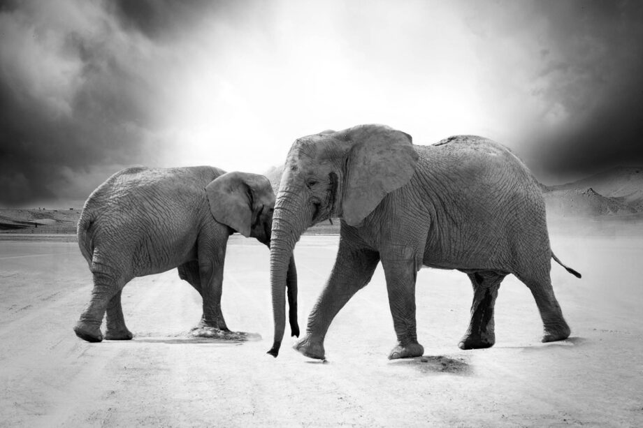8946004323917_Photographer unknown_Elephant dance@0.5x-50