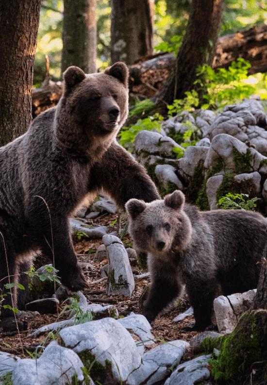 Bears-min