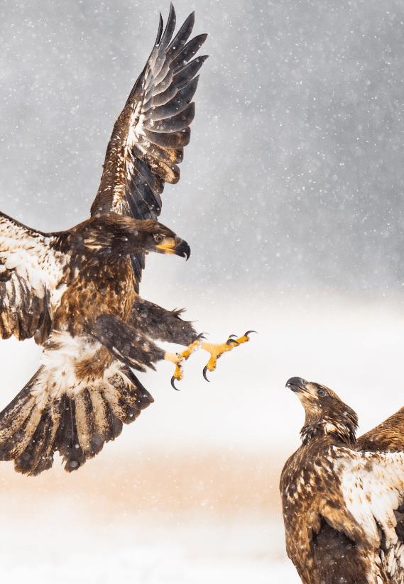 Eagles-min