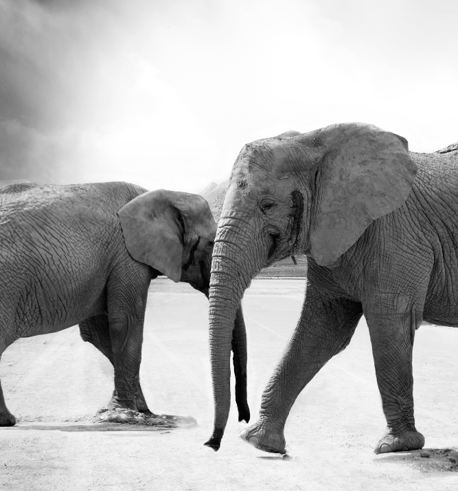 Elephant-dance-min