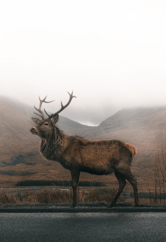 Elk-min
